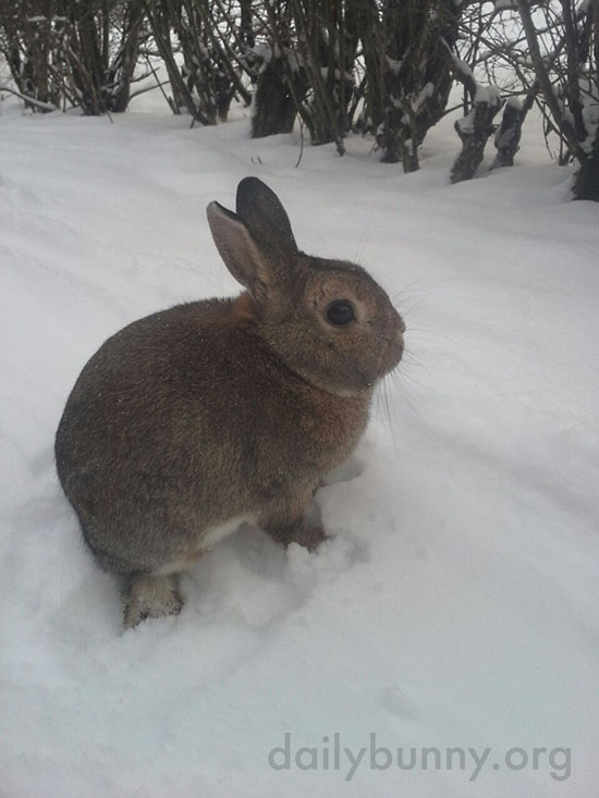 Bunny Has Seen the Snow and Prefers the House Instead