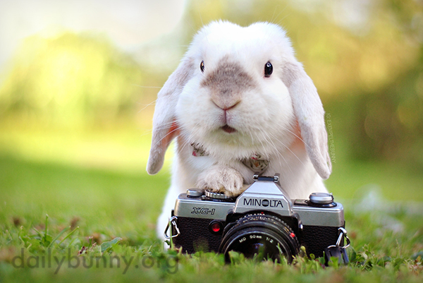 Bunny Has a Springtime Photo Shoot Outdoors 1