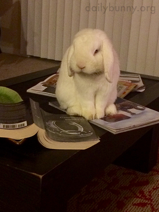 Bunny Is Done Reading and Would Like Cuddles Now