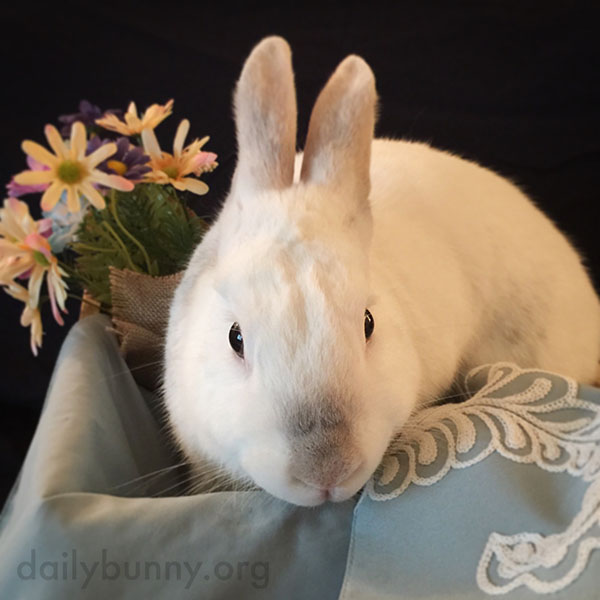 Bunny Makes the Springtime Flowers Look More Springtimey