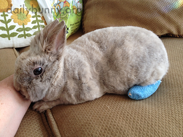Bunny Recovers from an Injury Sustained by Overzealous Thumping 1