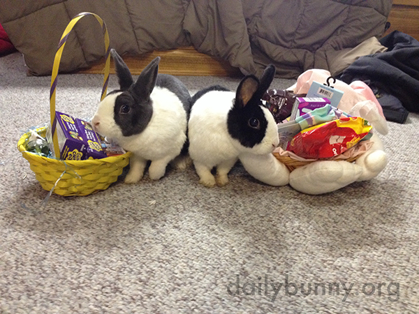 It's the Daily Bunny's 2015 Easter Mega-Post! 6