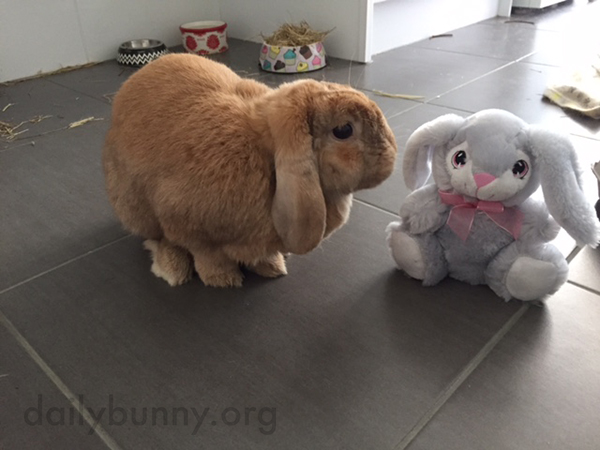 It's the Daily Bunny's Easter 2015 Mega-Post, Part Two! 2