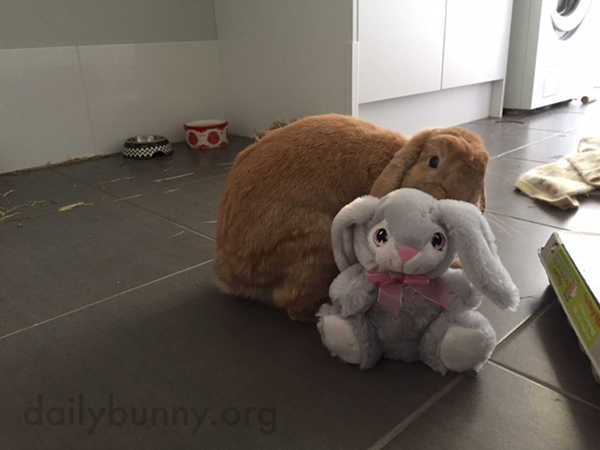 It's the Daily Bunny's Easter 2015 Mega-Post, Part Two! 3