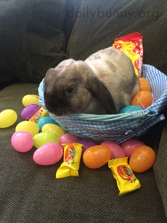 It's the Daily Bunny's Easter 2015 Mega-Post, Part Two! 6