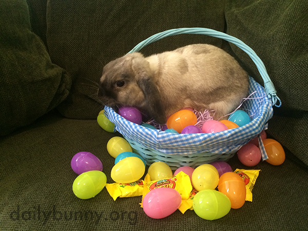 It's the Daily Bunny's Easter 2015 Mega-Post, Part Two! 7