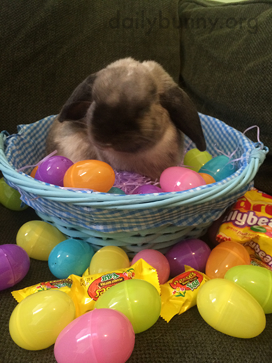 It's the Daily Bunny's Easter 2015 Mega-Post, Part Two! 8