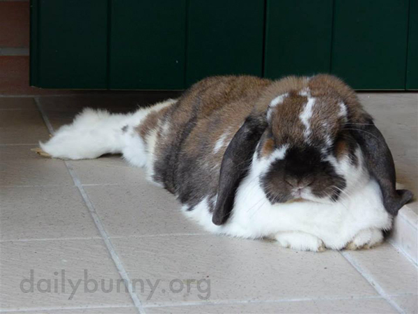 These Bunnies Know How to Relax 3