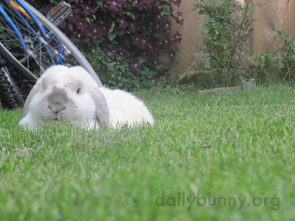 Bunnies Quietly Enjoy the Backyard 1