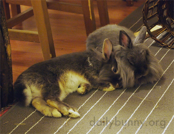 Bunnies Very Contentedly Share Some Snuggle Time
