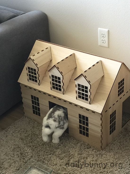 Bunny Enters Her House within a House