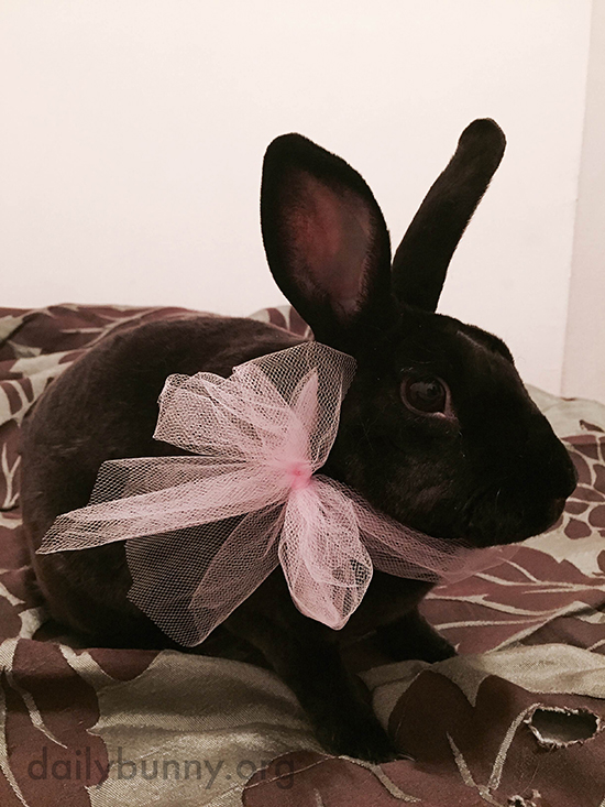 Bunny Is All Dressed Up for a Fancy Dinner Date at the Refrigerator