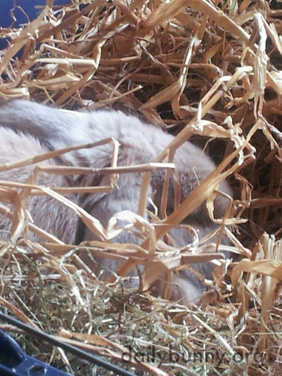 Bunny Naps in a Big Fluffy Pile of Hay and Grass