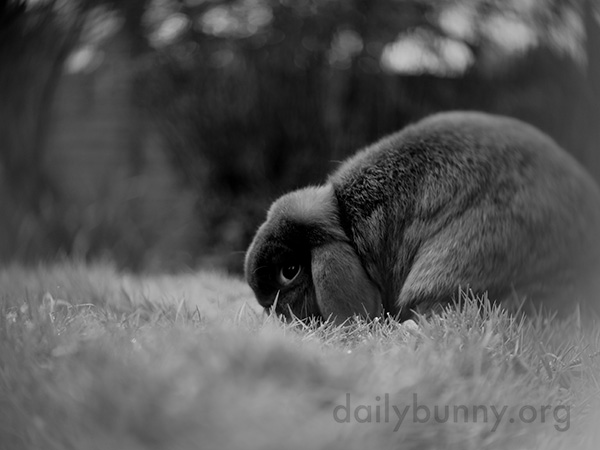 Bunny Samples the Grass