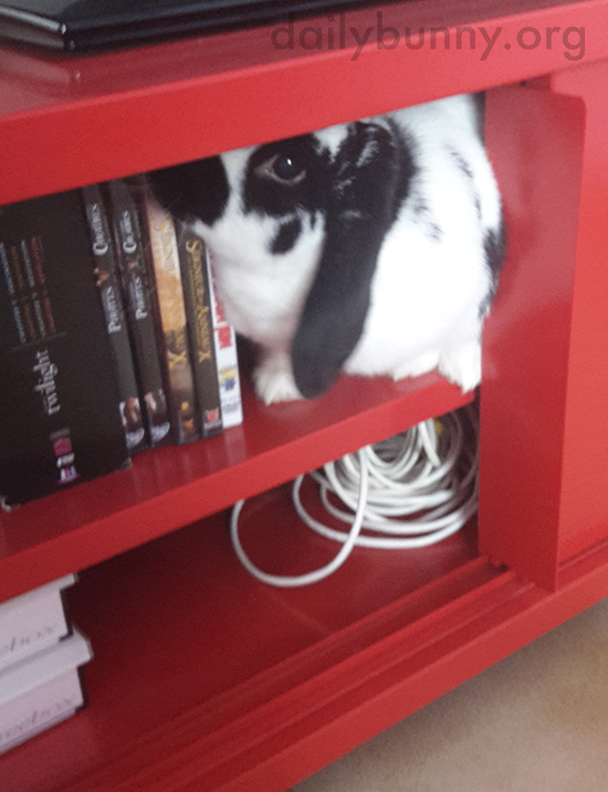 Bunny Selects a Movie to Watch