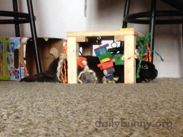 Bunny Stretches Out Under the Toy Table