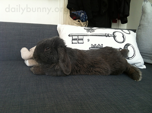 Bunny Takes Advantage of the Sofa Space and Stretches Out