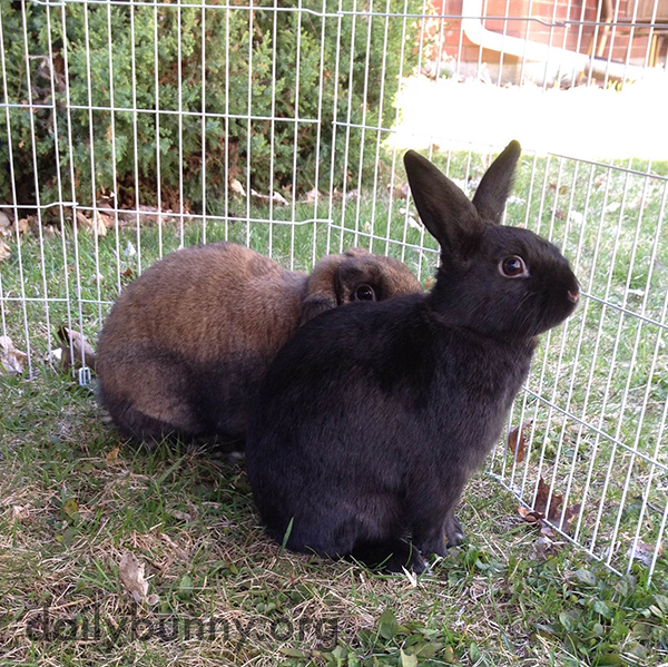 Bunny Turns Her Distracted Friend's Attention Back to Where It Should Be 2