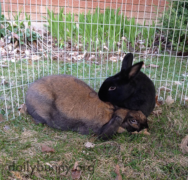 Bunny Turns Her Distracted Friend's Attention Back to Where It Should Be 3