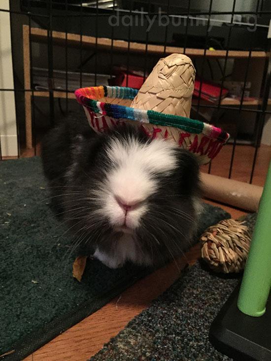 Bunny Wears His Sombrero for Cinco de Mayo 1