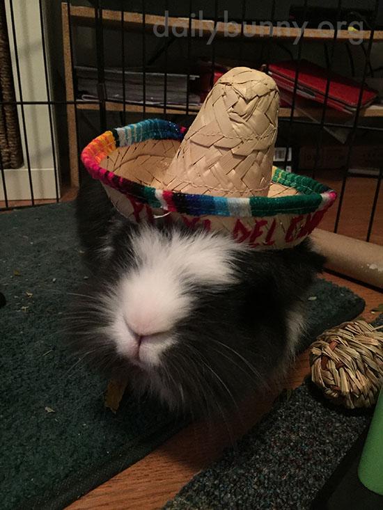 Bunny Wears His Sombrero for Cinco de Mayo 2