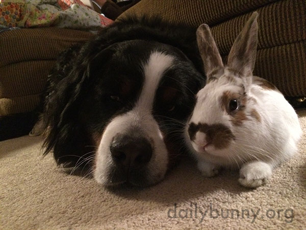 Bunny and the Dog Enjoy a Little Cuddle Time