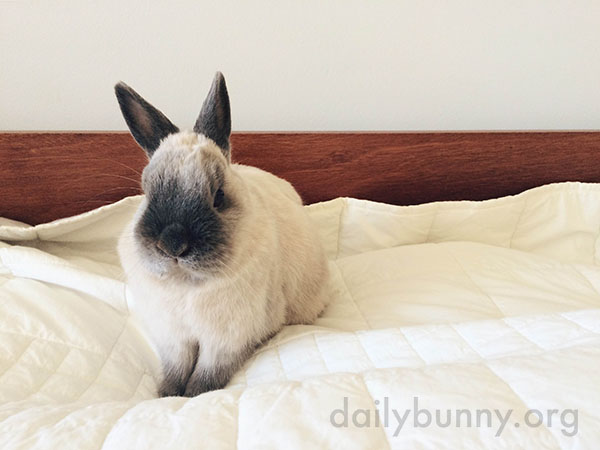 Bunny's Found a Good Place to Supervise the Room From