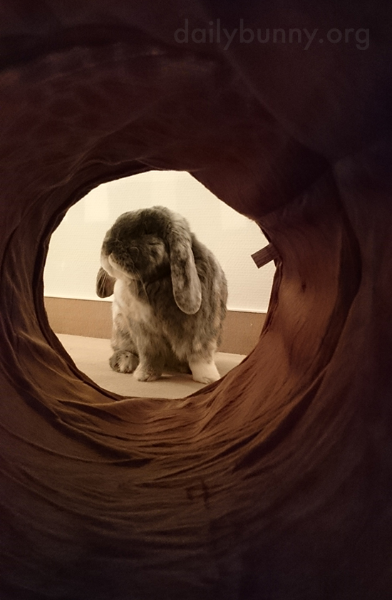 The Light at the End of the Tunnel Is Bunny!
