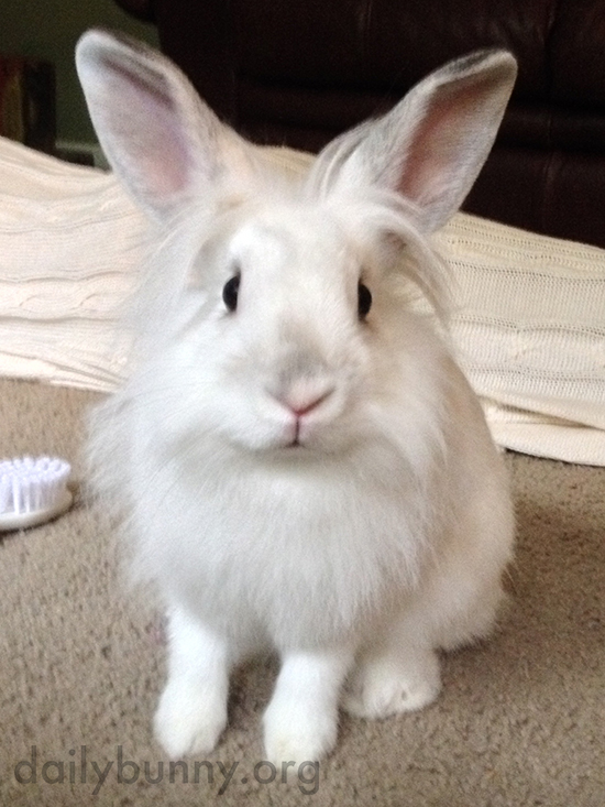 Bunny Attempts to Telepathically Communicate Her Desire for Treats to Human