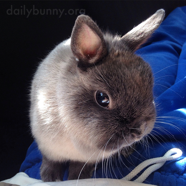 Bunny Gives Her Human a Coy Look