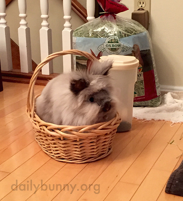 Bunny Has Found a Cozy Basket to Sit In 1