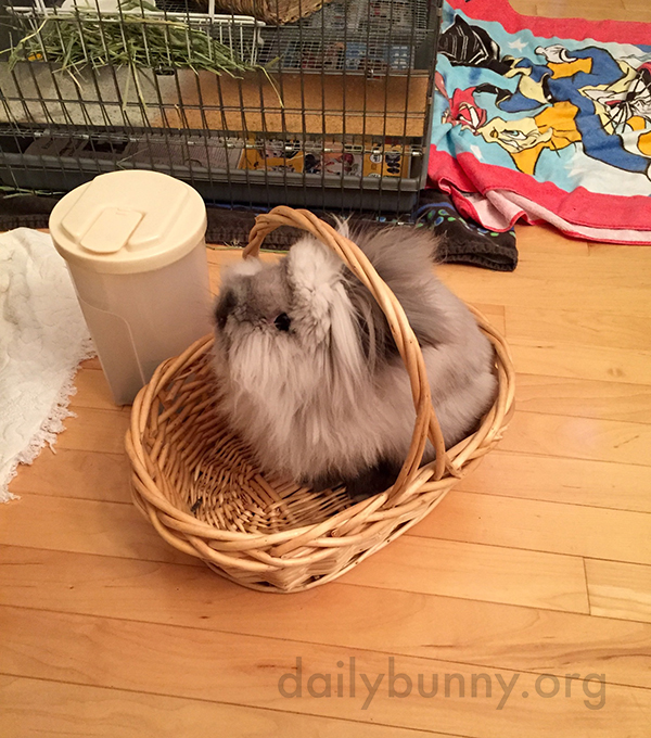 Bunny Has Found a Cozy Basket to Sit In 2