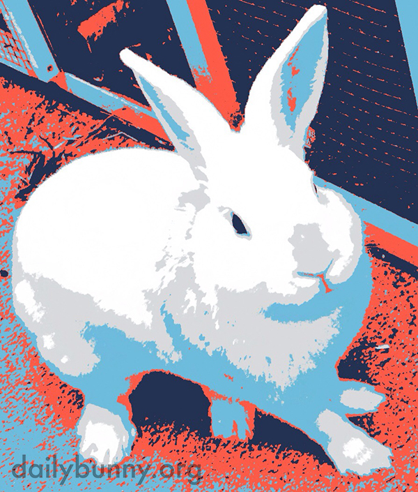 Bunny Is Proud to Announce His Candidacy for the 2016 Presidential Race!