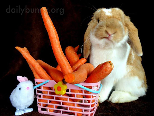 Bunny Needs Some Greens to Go with These Carrots