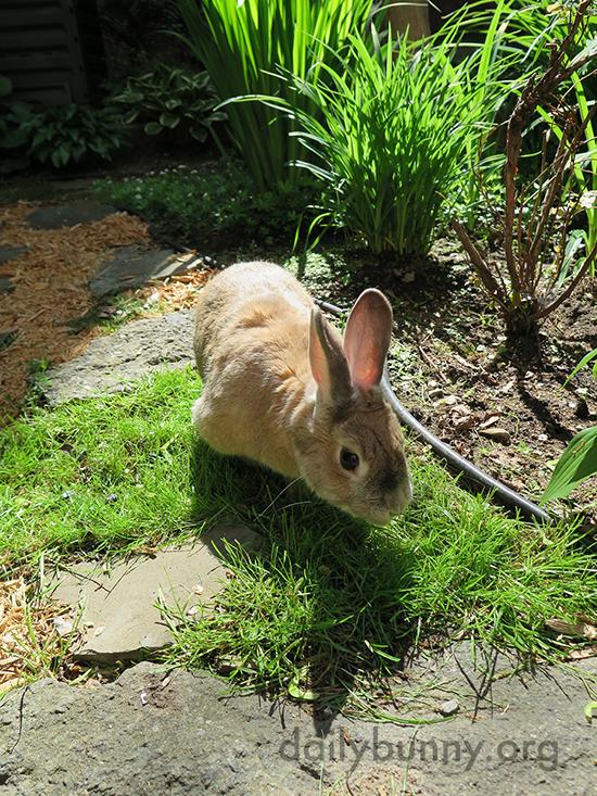 Bunny Sets to Exploring the Garden