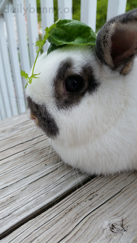 Bunny Wears a Tiny Leaf Fascinator 1