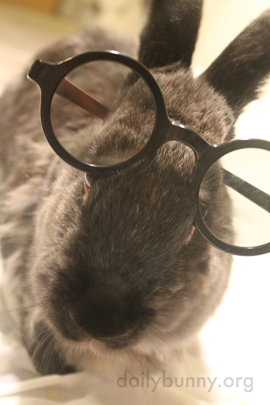 Bunny, You Look Very Smart in Those Glasses