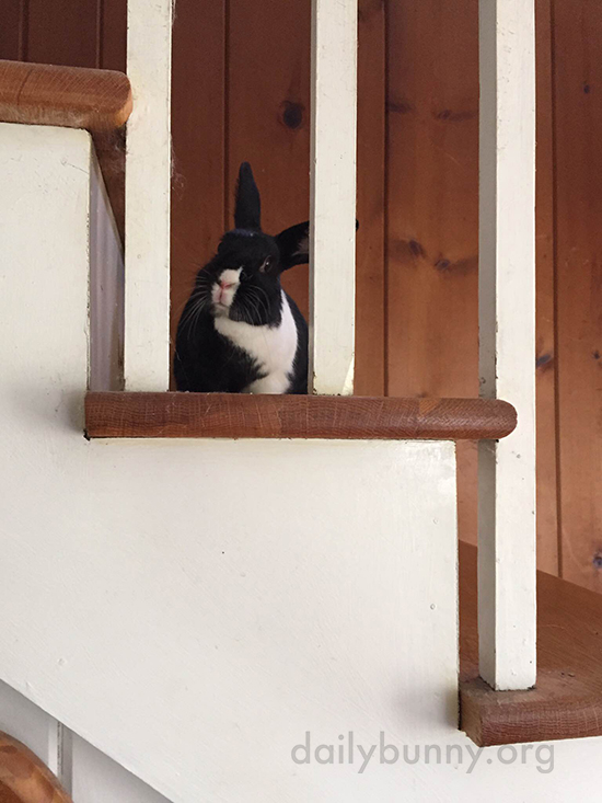 Bunny, You're So Little - How Did You Get Up Those Big Stairs?