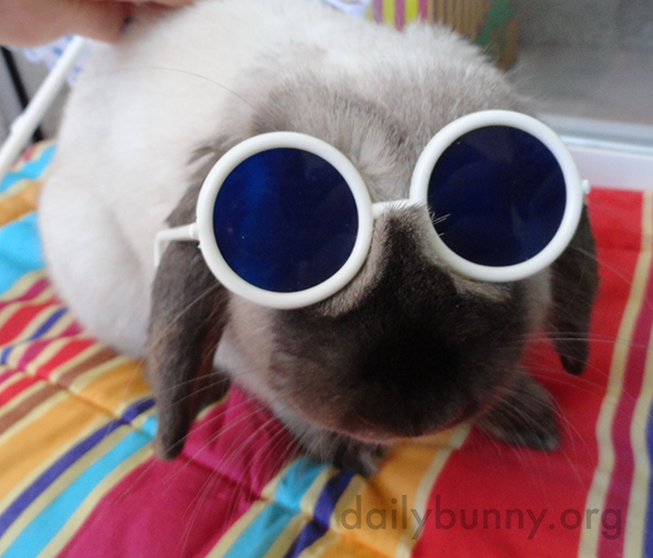 Bunny's Ready to Go to the Beach and Get Digging!
