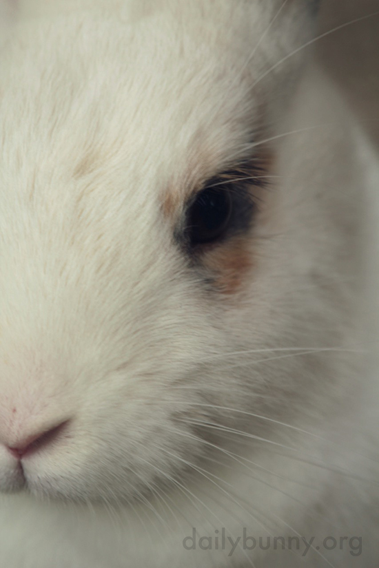 Closeup of Bunny's Soft Fur and Whiskers