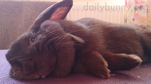 Flopped Bunny Is an Accomplished Relaxer