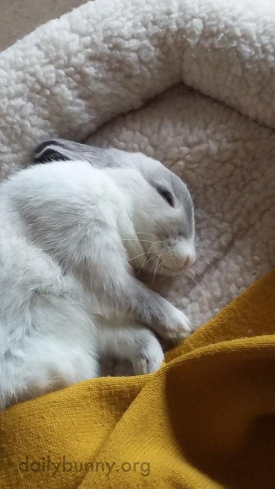 Sweet Dreams, Little Bunny