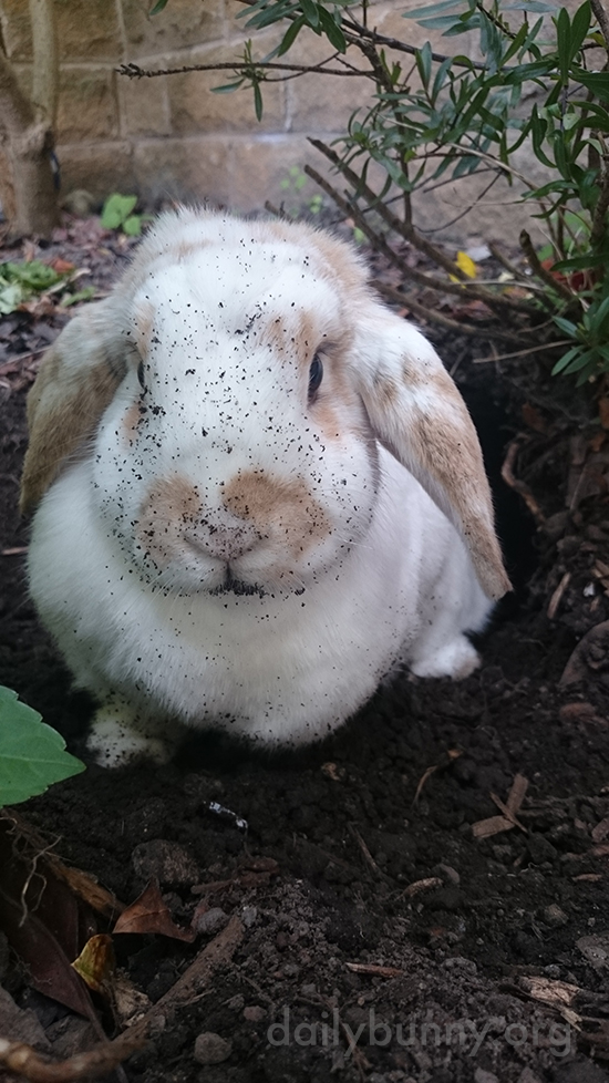 You're Interrupting My Digging, Human!