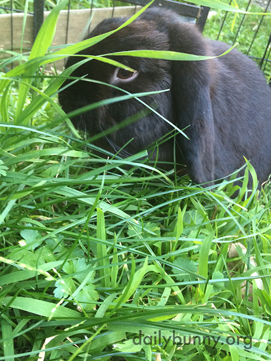 Anthropologist Bunny Observes His Human Through the Tall Grass