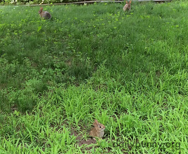 Baby Bunny's Secret Service Guards Are Never Too Far Away