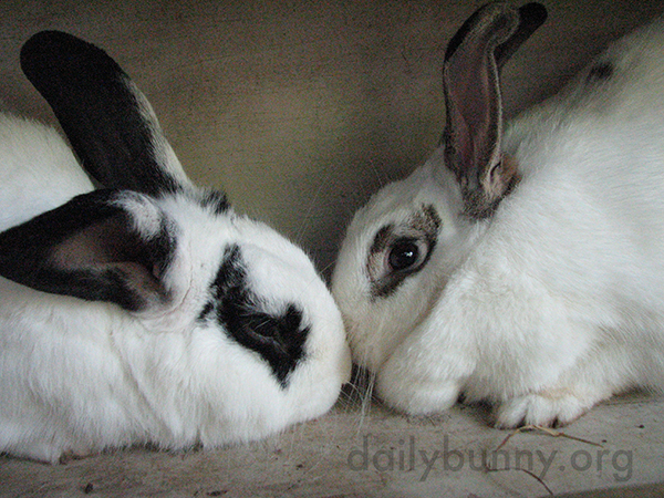 Bunnies Touch Noses