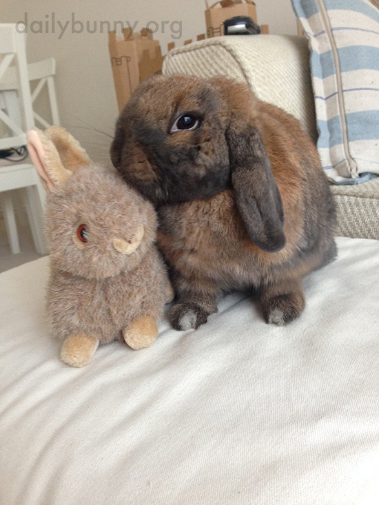 Bunny Gives Her Stuffed Friend a Little Kiss