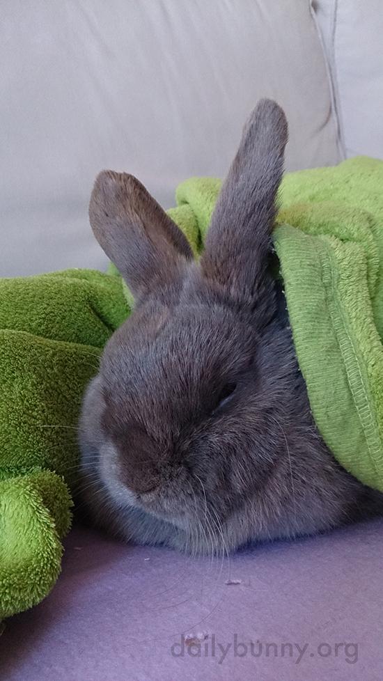 Bunny Naps Cozied Up in Her Favorite Blanket