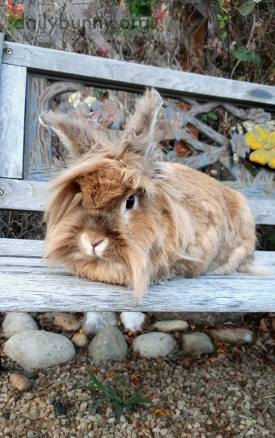 Bunny Relaxes on a Garden Bench