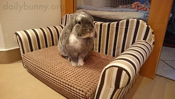 Bunny-Sits-on-His-Bunny-Sized-Sofa-1